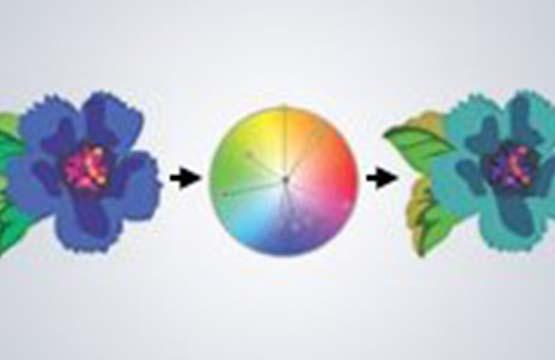 Özel Renk Harmonileri
